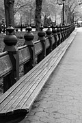 Christiane Schulze Posters - Bench Row Black and White Poster by Christiane Schulze
