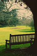Hazy Metal Prints - Bench under a tree Metal Print by Jasna Buncic