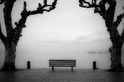 Sycamore Framed Prints - Bench Under Sycamore Trees Framed Print by Joana Kruse