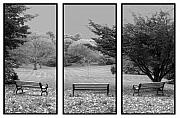 Tom Romeo Framed Prints - Bench View Triptic Framed Print by Tom Romeo