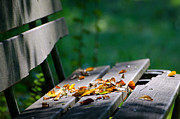 Red Leaf Prints - Bench with leaves Print by Mats Silvan