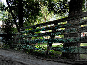 Gaston County Metal Prints - Benched Metal Print by Tammy Cantrell