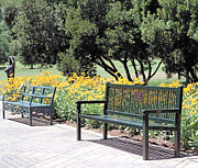 Benches Photo Originals - Benches  by Lee Hartsell