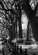 Park Benches Digital Art - BENCHES TREES and LAMPS in BLACK AND WHITE by Rob Hans