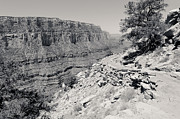South Kaibab Trail Prints - Bend on the South Kaibab Trail BW Print by Julie Niemela