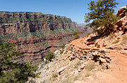 South Kaibab Trail Prints - Bend on the South Kaibab Trail Print by Julie Niemela