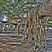 Lahaina Prints - Beneath the Banyan Tree Print by DJ Florek