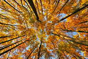 Reserved Prints - Beneath the canopy Print by Edward Kreis