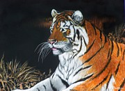Scratchboard Paintings - Bengal Boy by Jack Bolin