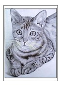 Paper Drawings Originals - Bengal cat IV by Jeroen Van Neijhof