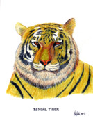 Wildlife Framed Prints Drawings Framed Prints - Bengal Tiger Framed Print by Frederic Kohli