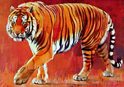 Mammal Paintings - Bengal Tiger  by Mark Adlington