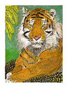 Framed Mixed Media - Bengal Tiger with green eyes by Jack Pumphrey