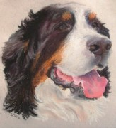 Donna Teleis - Bernese Mountain Dog