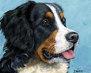 Berner Framed Prints - Bernese Mountain Dog on Blue Framed Print by Dottie Dracos