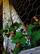 Black Berries Metal Prints - Berries Metal Print by Jessica Brawley