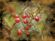 Nature Paintings - Berries  by Sue Gardiner