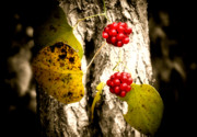 Winter Photos Posters - Berry Special Poster by Karen M Scovill