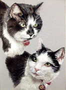 Black And White Cats Pastels - Bertie and Billy by Tanya Patey