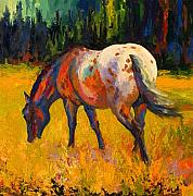 Horses Painting Framed Prints - Best End Of An Appy Framed Print by Marion Rose