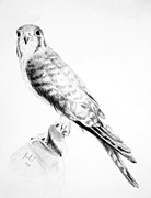 Falcon Drawings Metal Prints - Best friend Metal Print by Eleonora Perlic