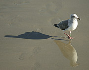 Seagull Metal Prints - Best Friends Metal Print by Ernie Echols