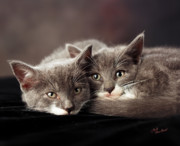 Kittens Prints - Best Friends Forever Print by Judi Quelland