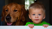 Golden Retriever Photos - Best Friends by Matt Dobson