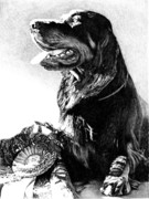 Gordon Setter Prints - Best In Show Print by Carole Raschella