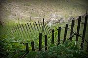 Sand Fences Photos - Between the Lines by Linda Mishler