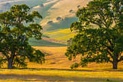 Bay Area Photo Prints - Between Two Trees Print by Marc Crumpler