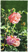 Rose Blooms Posters - Beverly Hills Rose Poster by David Lloyd Glover