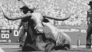 Texas Longhorns Digital Art Posters - Bevo BW6 Poster by Scott Kelley