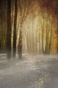 Frightening Landscape Prints - Beware Misty Woodland Path Print by Meirion Matthias