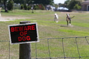Theresa Willingham Metal Prints - Beware of Dogs Metal Print by Theresa Willingham