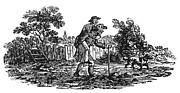 Bewick Framed Prints - Bewick: Man Carrying Man Framed Print by Granger