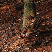 Garbage Prints - Bicycle abandoned in a forest Print by Bernard Jaubert