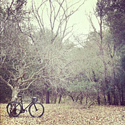 Stationary Photos - Bicycle Awaits At Entrance To Forest by Joey Celis