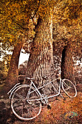 Cyclists Framed Prints - Bicycle Built for Two Framed Print by Debra and Dave Vanderlaan