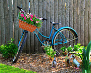 Flower Basket Posters - Bicycle Garden Poster by Perry Webster