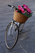 Bicycle In Lucca Italy Print by Bob Christopher