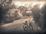 Asphalt Photos - Bicycle in Tucson by Janeen Wassink Searles
