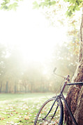 Bicycle Leaned On Big Tree In Sunlight. Print by Guido Mieth