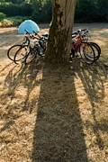 Bicycle Photos - Bicycles leaning against a tree trunk with tent in background by Sami Sarkis