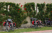 Roses Photos - Bicycles Parked by the Wall by Louise Heusinkveld