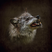 Wolf Photos - Big Bad Wolf by Louise Heusinkveld