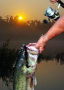 Wade Fishing Prints - Big Bass At Sunrise Print by Ron Kruger