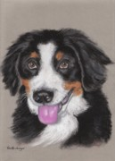 Animal Pastels Pastels Prints - Big Bernie Print by Pamela Humbargar