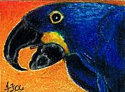 Macaw Drawings - Big Blue by Terri Flowers