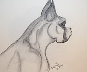 Boxer  Drawings Prints - Big Boxer Print by Maria Urso